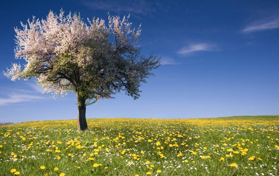 Bild von dem Produkt Baum auf der Wiese Vorderseite
