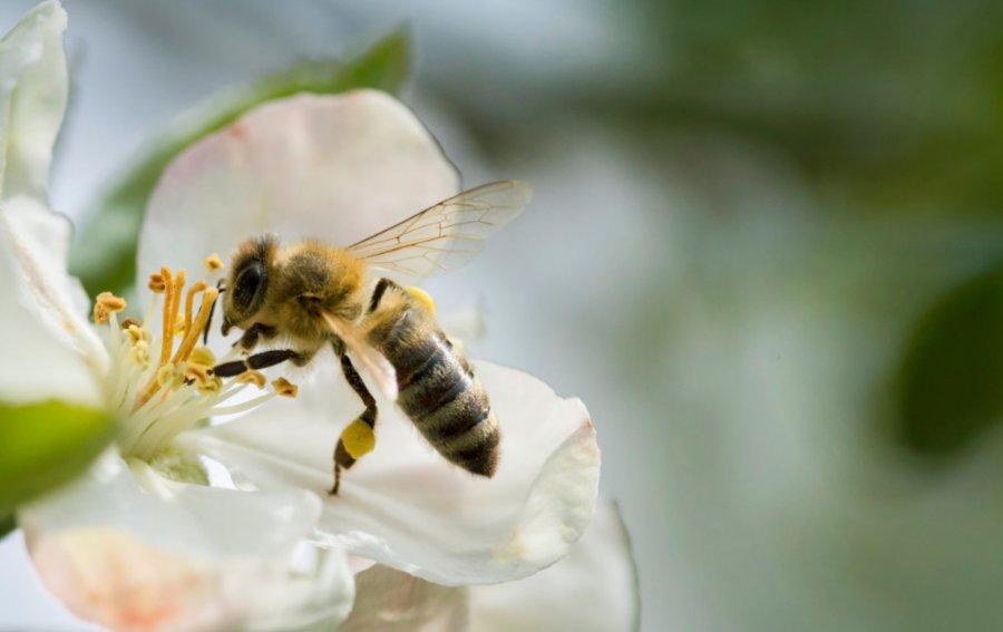 Bild von dem Produkt Biene Vorderseite