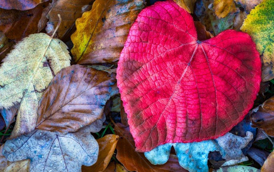 Bild von dem Produkt Blätter Vorderseite