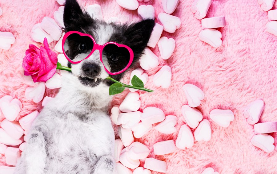 Bild von dem Produkt Cooler Hund Vorderseite
