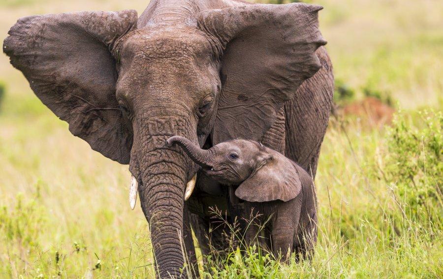 Bild von dem Produkt Elefant mit Baby Vorderseite