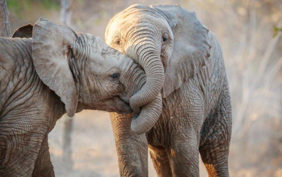Bild von dem Produkt Elefanten Vorderseite