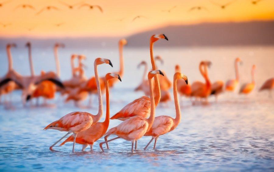 Bild von dem Produkt Flamingos Vorderseite