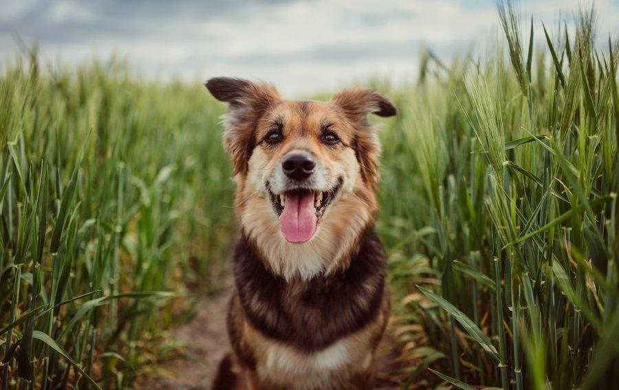 Bild von dem Produkt Glücklicher Hund Vorderseite