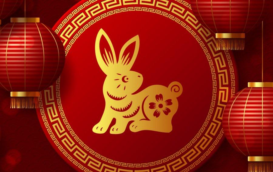 Bild von dem Produkt Hase Vorderseite