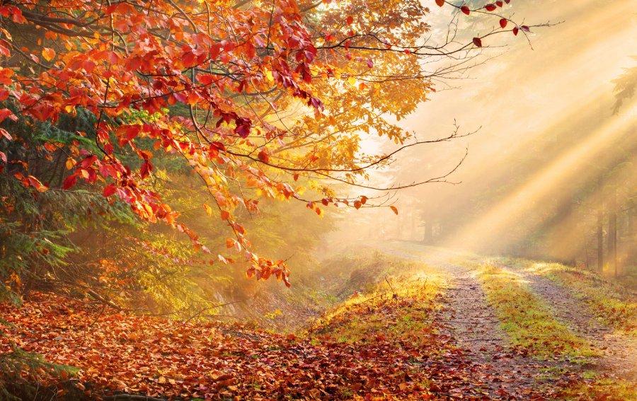 Bild von dem Produkt Herbst Vorderseite