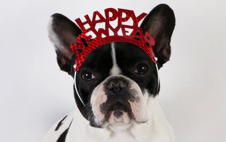 Bild von dem Produkt Hund Happy New Year Vorderseite