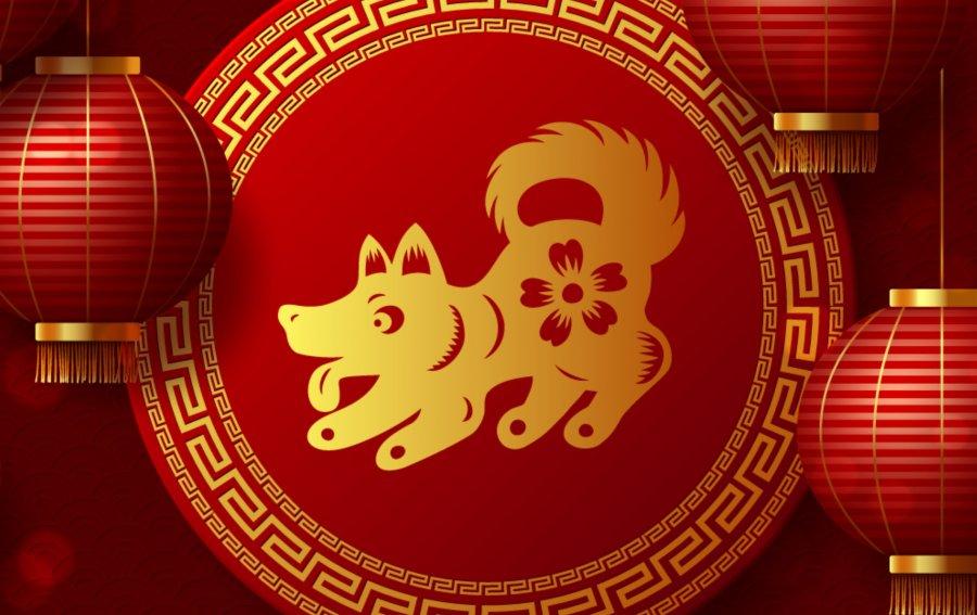 Bild von dem Produkt Hund Vorderseite