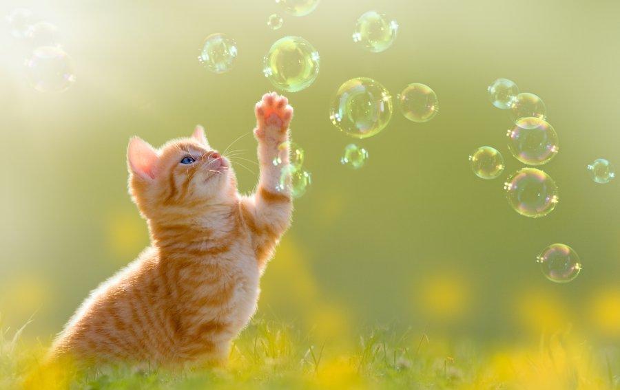 Bild von dem Produkt Kätzchen und Seifenblasen Vorderseite