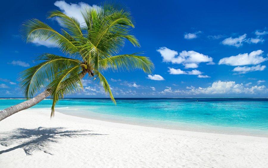 Bild von dem Produkt Karibik Vorderseite