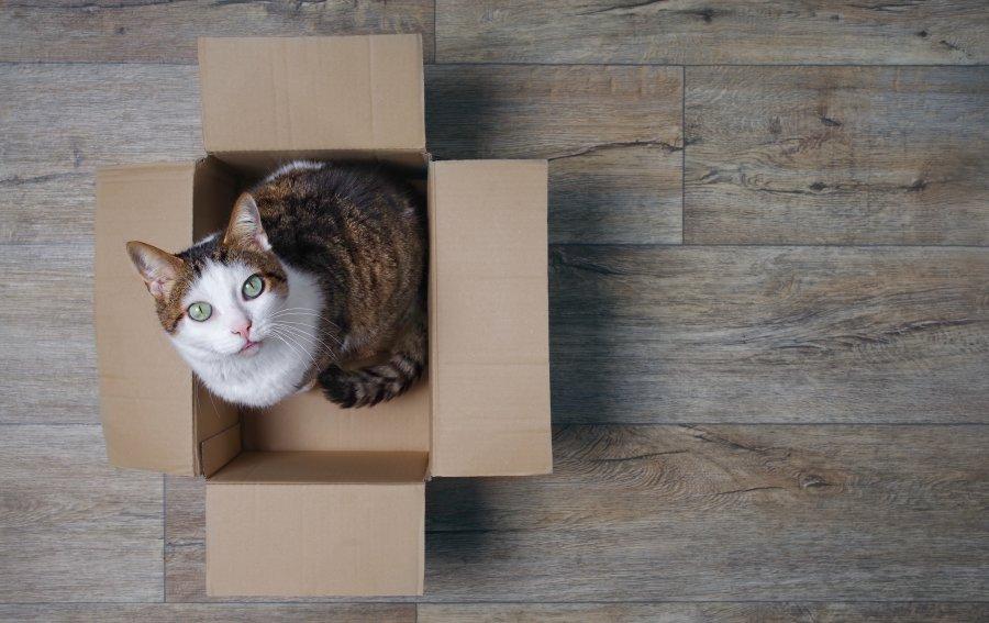 Bild von dem Produkt Katze Vorderseite
