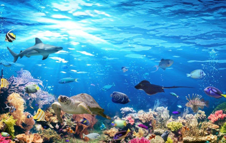Bild von dem Produkt Korallenriff Vorderseite
