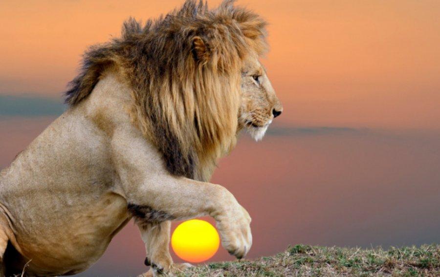 Bild von dem Produkt Löwe Vorderseite