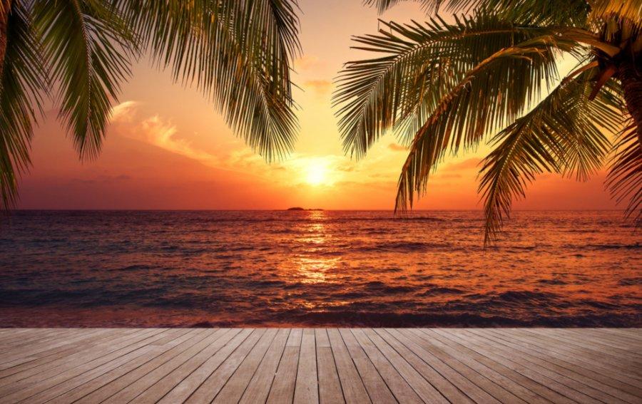 Bild von dem Produkt Meer und Palmen Vorderseite