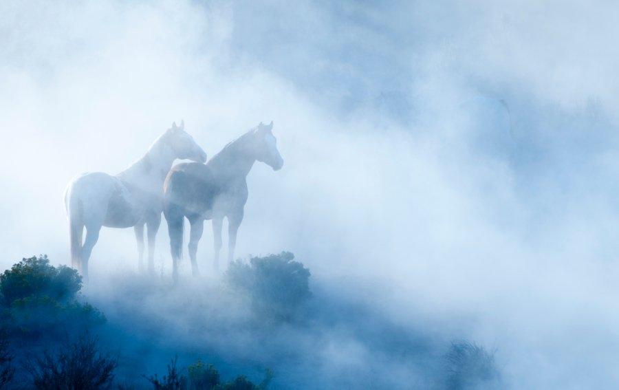 Bild von dem Produkt Pferde Vorderseite