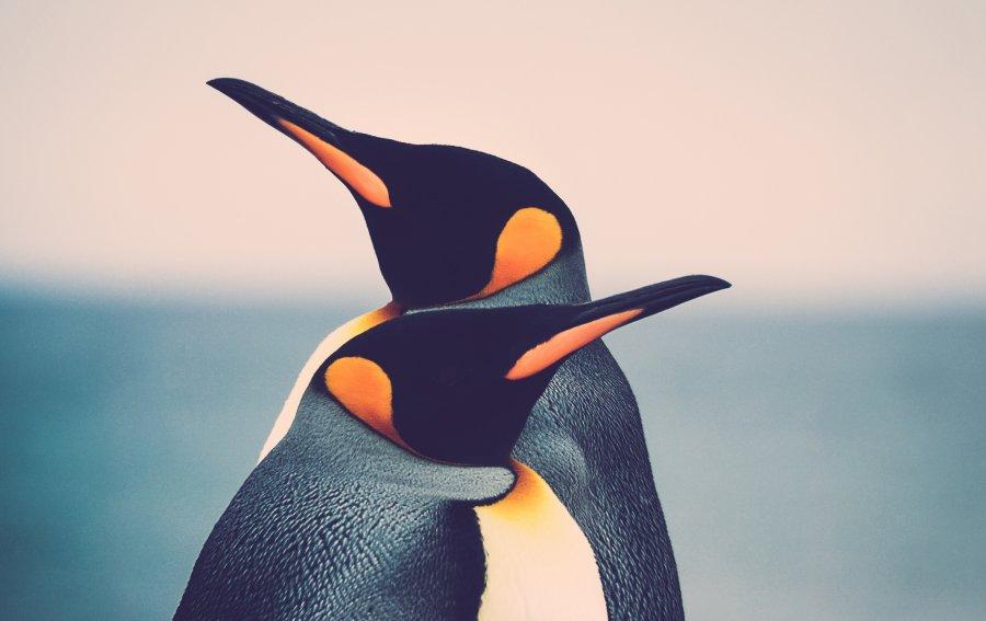 Bild von dem Produkt Pinguine Vorderseite