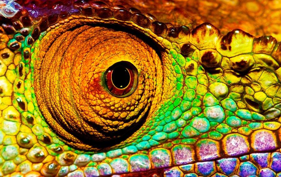 Bild von dem Produkt Reptil Vorderseite