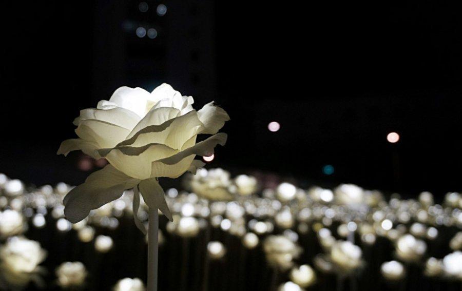 Bild von dem Produkt Rose in der Nacht Vorderseite