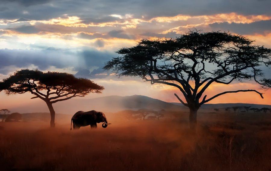 Bild von dem Produkt Safari Vorderseite