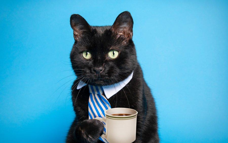 Bild von dem Produkt Schwarze Katze trinkt Kaffee Vorderseite