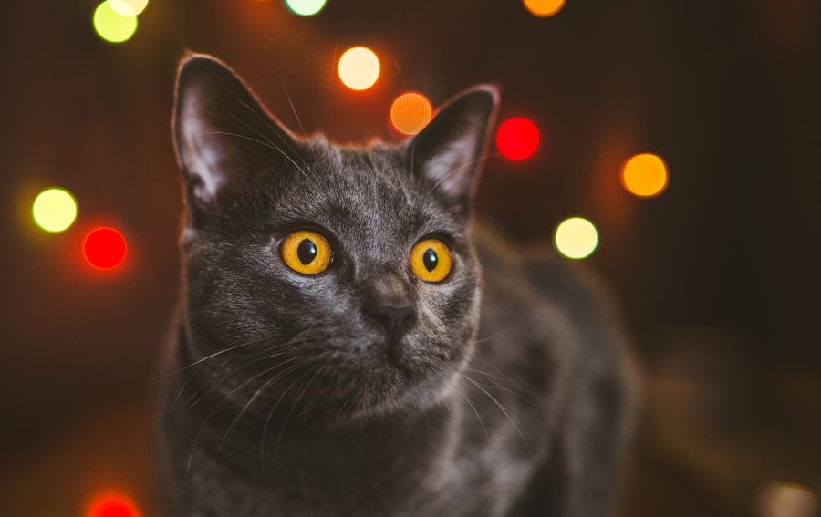 Bild von dem Produkt Schwarze Katze Vorderseite