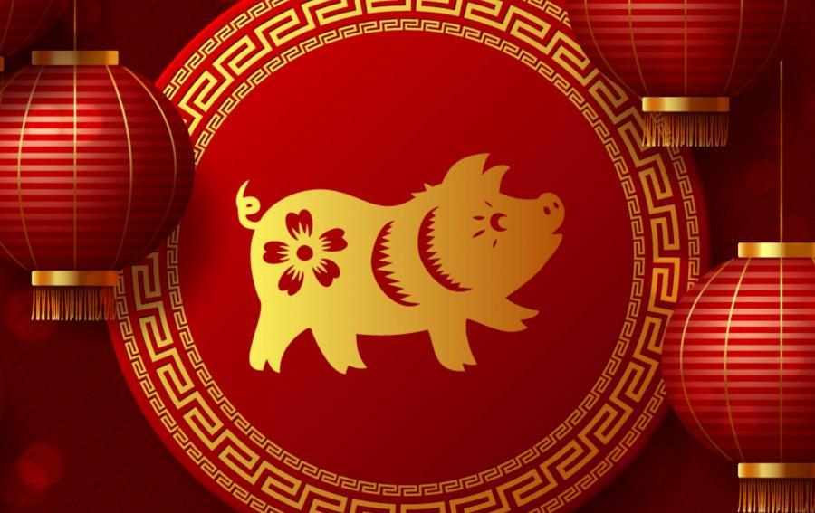 Bild von dem Produkt Schwein Vorderseite