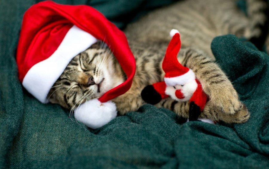 Bild von dem Produkt Weihnachts Mietzi Vorderseite