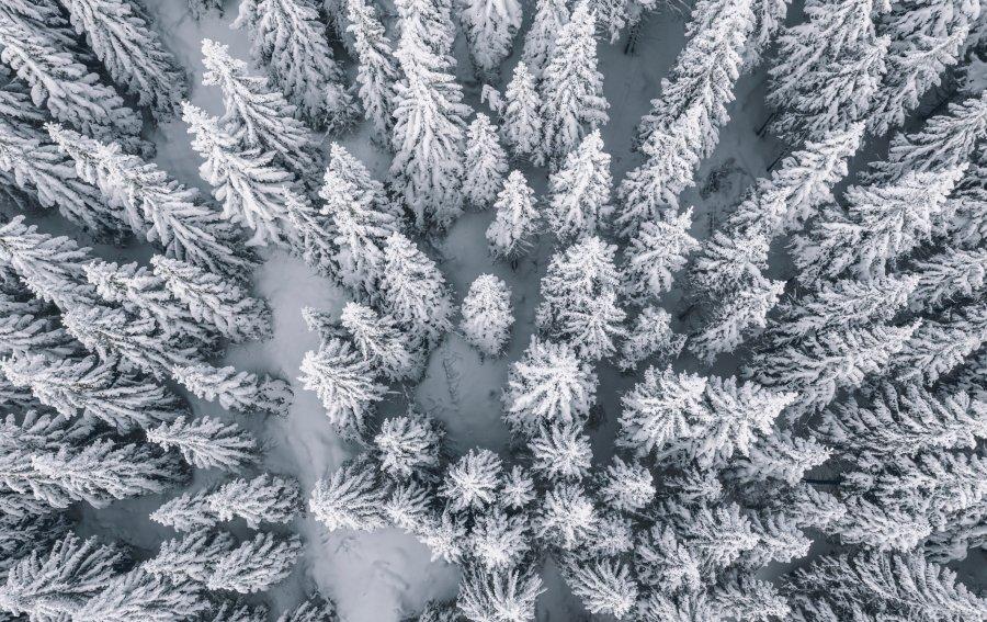Bild von dem Produkt Winterwald Vorderseite