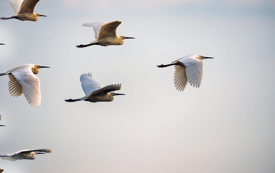 Bild von dem Produkt Zugvögel Vorderseite