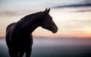 Bild von dem Produkt Braunes Pferd