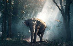 Bild von dem Produkt Elefant