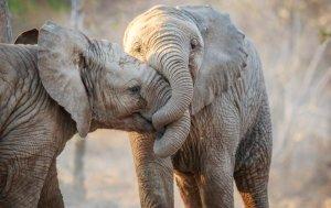 Bild von dem Produkt Elefanten