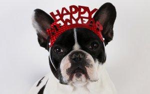 Bild von dem Produkt Hund Happy New Year