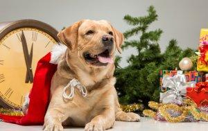 Bild von dem Produkt Hund unterm Baum
