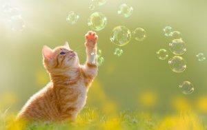 Bild von dem Produkt Kätzchen und Seifenblasen