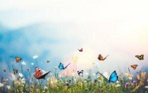 Bild von dem Produkt Schmetterlinge