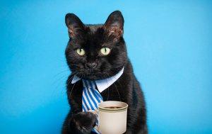 Bild von dem Produkt Schwarze Katze trinkt Kaffee