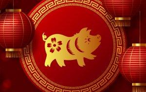 Bild von dem Produkt Schwein