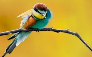 Bild von dem Produkt Vogel