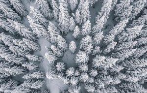 Bild von dem Produkt Winterwald